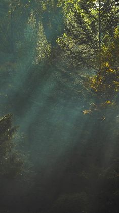 Wood Nature Tree Sunshine Light iPhone 5s wallpaper
