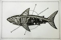 Skeleton shark by CosmicDarK on DeviantArt