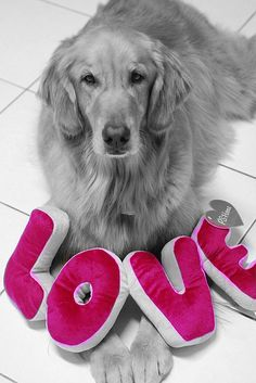 From the bottom of my heart!   More Valentines Day treats at CanineStyles.com #dog