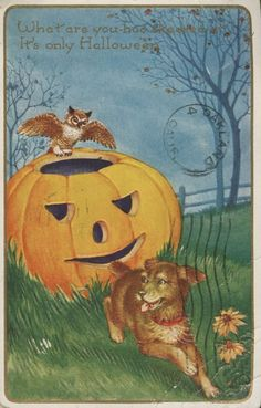 An owl and dog play near a big jack o' lantern on this Halloween postcard.