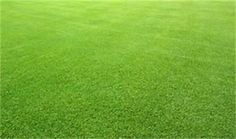 Planting bermuda grass seed is a very good option for your lawn or pasture if you live in the proper climate. Read how to successfully plant bermuda grass. Landscaping Along Fence, Home Landscaping, Bermuda Grass Seed, Lawn Care Business, Landscape Borders, Types Of Grass, Professional Landscaping, Yard Care, Lawn And Garden