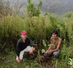 Bolivia - organic farm volunteering