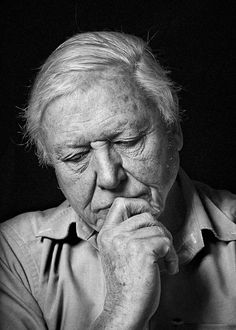 I love this portrait of Sir David Attenborough by Sam Faulkner, which was used in