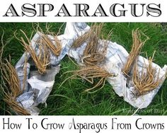 Asparagus - All the info to start growing your own Asparagus. How to plant asparagus crowns in the home garden. Planting Asparagus Crowns, Asparagus Plant, Planting Flowers, Asparagus Roots, Planting Plants, Fruit Garden, Edible Garden, Vegetable Garden, Organic Gardening