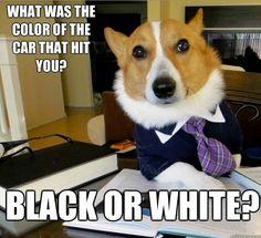 Color - Lawyer Dog memes