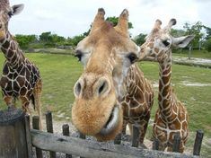 Looking To Visit Zoo Miami In Fl Find More Information About This Attraction And Other Nearby Family Attractions Hotels On Vacation