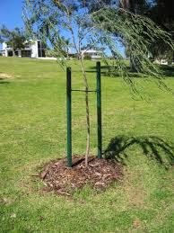 tree support stakes sign google 검색 lugares pinterest