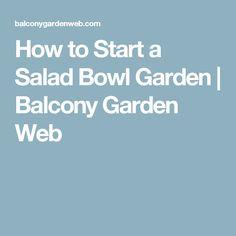 How to Start a Salad Bowl Garden | Balcony Garden Web