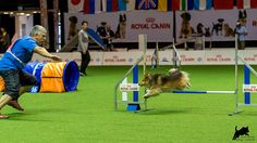 https://flic.kr/p/CiGjw8 | Dmitri Kargin mit Stenley | AWC 2015 - Team Jumping Small