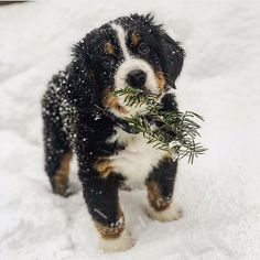 puppy love world s cutest puppies speedy publishing