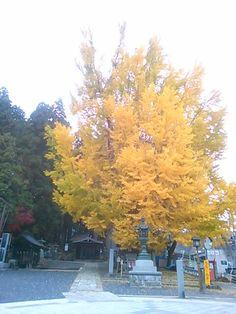 Kumano Taisha/Yamagata