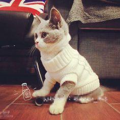 Camisola do gato e cão roupas em Roupas de gato de Casa & jardim no AliExpress.com | Alibaba Group