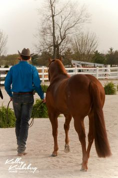 In the trot up, each handler needs to trot their horse up and back the length of the arena.