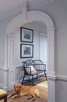 LOVE the detailed moldings...and the dog!