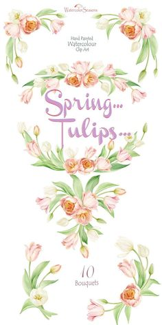 Watercolor Spring Tulips Flower clipart Hand painted clipart
