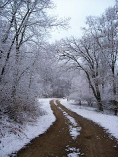 Snow Is in the Air from Nature Net