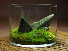 wabikusa- LOVE this. Beautiful, simple rocks with understated, lovely moss