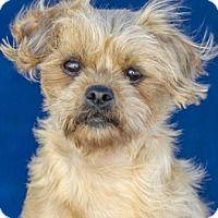 Adopt A Pet :: Fidget - Colorado Springs, CO