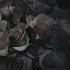 """(Open with Aden) I smile down at the red roses in front of me. It has always been my favorite type of flower, and the most beautiful in my opinion. I reach out to touch one, my fingers brushing over the delicate petals. With my touch, the roses start to wither, turning an ugly shade of black. """"No!"""" I cry. """"Come back!"""" I concentrate the best I can to bring them back, but every attempt fails. """"Uh... hello?"""" You say as you come up behind me. """"Um... what are you doing?"""""""