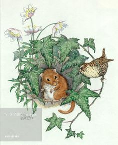 A bird and a mouse in some ivy. Illustration by Molly Brett.