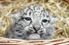 The Chicago-area zoo released photos and a video of its two newest additions…