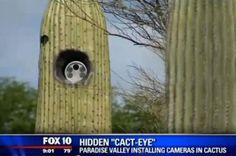 Cactus Cameras Alarm