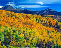 Aspen in the La Sal Mountains, Manti La Sal National Forest, Utah  Near Warner Lake  View toward Gold Basin  October.....   Another beauty, Tom, thanks. The peaks are 12K+; La Sals are a laccolith along w/ the Abajo & Henry Mnts. Robert