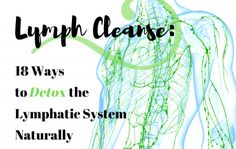 Physical Education Games, Health Education, Physical Activities, Circulatory System, Respiratory System, Detox Lymphatic System, Lymph Fluid, Inversion Table, Muscle Anatomy