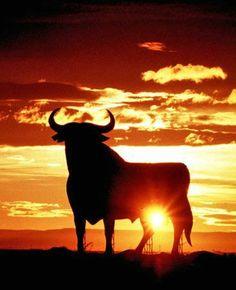 Resultado de imagen de fotos del toro de osborne