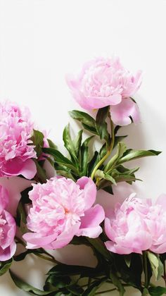 ideas for wall paper flores iphone pink flowers nature Garden Wallpaper, Flower Wallpaper, Iphone Wallpaper, Nature Wallpaper, Spring Wallpaper, Amazing Flowers, Pink Flowers, Beautiful Flowers, Fresh Flowers