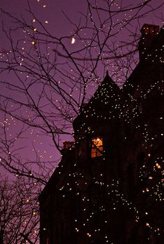 Purple Sky And Tree Lights halloween halloween pictures halloween images halloween ideas Fall Halloween, Happy Halloween, Halloween Night, Vintage Halloween, Purple Halloween, Halloween House, Halloween Fairy, Halloween Clothes, Spooky House