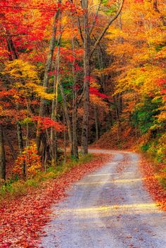 Autumn back road Fall Pictures, Fall Photos, Beautiful Landscapes, Beautiful Images, Beautiful Scenery, Autumn Scenes, Seasons Of The Year, Background Images, The Great Outdoors