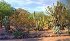 The Desert Botanical Garden in Phoenix:  we're long-time members and frequent visitors.  You should be too! :)