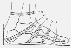 Measure Foot Profile: small heel, ball of foot, instep