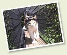 Safe healthy happy habitats for cats! Give your cat the free & easy life, a wholesome active lifestyle in a safe cat habitat by Home of Habitat Haven, makers of The Cat's Den.