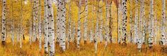 Peter Lik Photography ......one of my favorites!