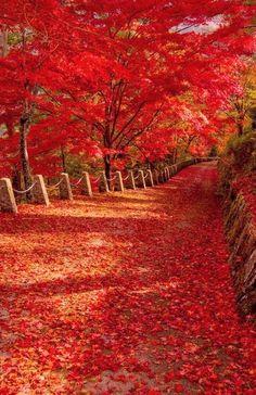 Magnifique automne #paysage  #automne  #forêt