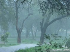 pictures of rainy days | appealing day for a rainy day walk in Islamabad Got completely soaked ...