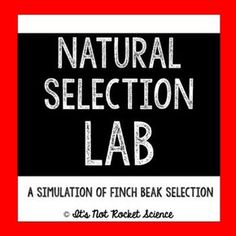 Have your students engage with natural selection to understand how evolution works in the real world! This natural selection lab is a fun, hands-on, and interactive biology lab that will help your students remember finch beaks forever! Perfect for starting your evolution unit.