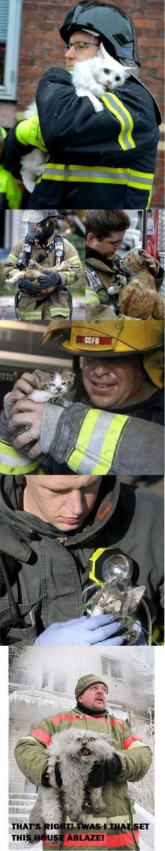 firemen rescuing cats