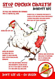 This is an information poster to explain why people should boycott KFC: to try to get them to decrease this cruel treatment of chickens.