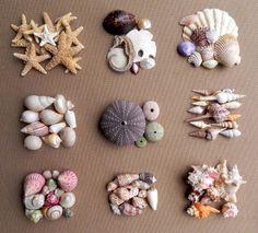 Summerland Cottage Studio: Collecting Seashells