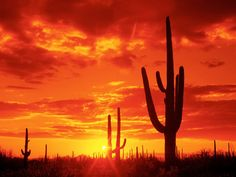 Saguaro National Park, located in the state of Arizona, is part of the United States national park system. Saguaro National Park is divided. Beautiful Sunset, Beautiful Places, Amazing Sunsets, Amazing Nature, Places To Travel, Places To See, Perfect Day, Desert Sunset, Desert Dream