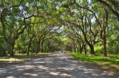 Family trip destinations in the US with kids: Savannah