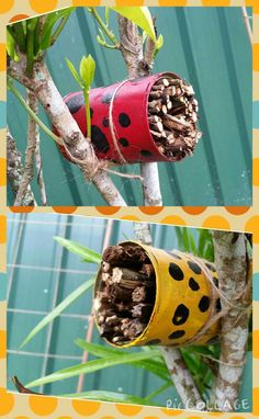 Lady bug hotels …