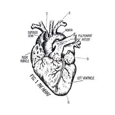 Temporary tattoo of a heart. Going to have this on my own heart.
