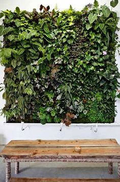 Woodsy wonderfulness in your home! vines and ivy leaves in a frame!!!