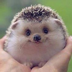 Cute Face via @animalglobe by awesomedreamplaces https://www.instagram.com/p/BAArHBRFNhv/ via https://scontent.cdninstagram.com/hphotos-xpt1/t51.2885-15/e35/926777_530239783810253_954646842_n.jpg