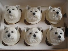 Westie cup cakes... these are so cute, there's no way I could eat them!