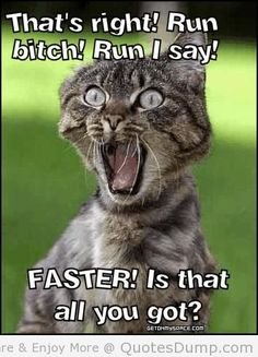 Memes have taken over the world. Browse our collection of happy birthday memes with funny cats, dogs and cute animals. Knitting Humor, Crochet Humor, Funny Crochet, Funny Cats, Funny Animals, Cute Animals, Funniest Animals, Animal Memes, Library Memes